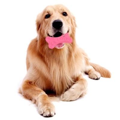 Дентална кучешка играчка Кокал