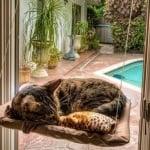 Котешко легло за прозорци